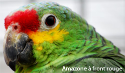 amazone a front rouge