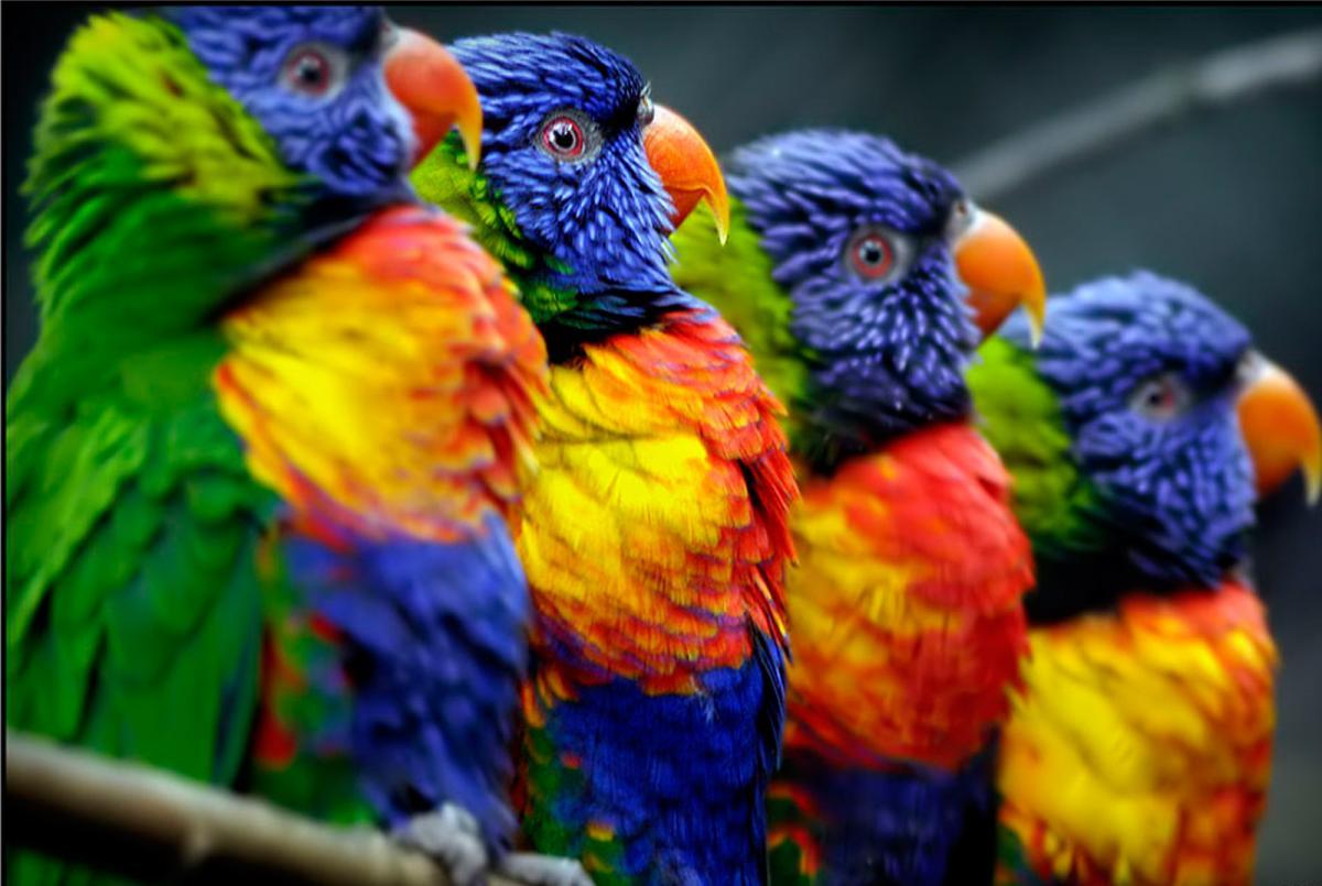 Protégez mes oiseaux du froid