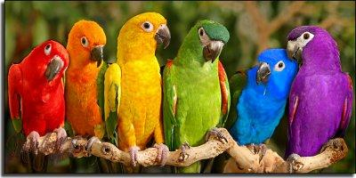 Adopter un perroquet: quelle espèce choisir?