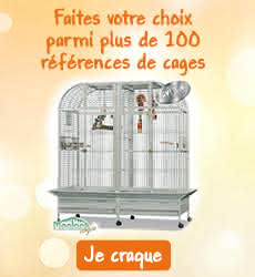 Cages perroquets