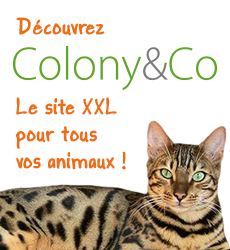 colony and co
