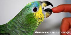 amazone a ailes orange2