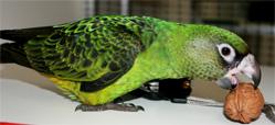 perroquet jardine alimentation1