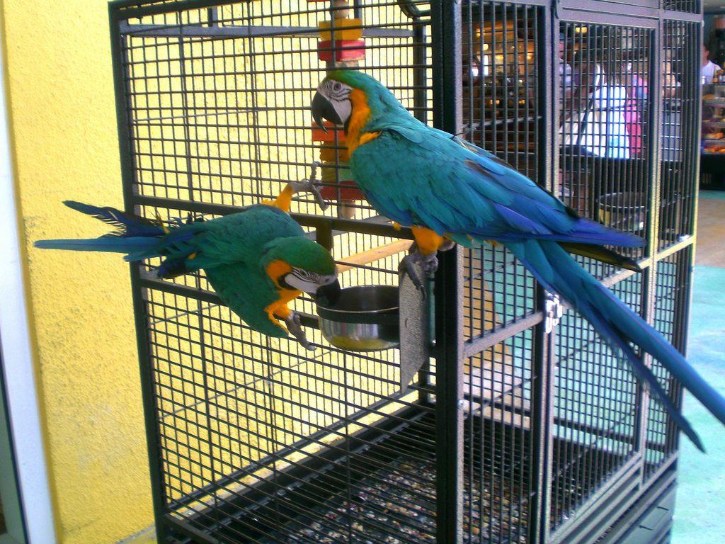 Image result for Offrir à votre perroquet un équipement adapté : 3 conseils pour choisir