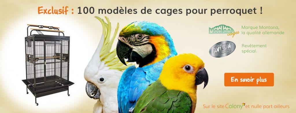 modèles cages montana - Colony Perroquet